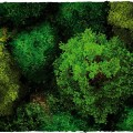 Terrain Tiles Set - Midland Nature 1